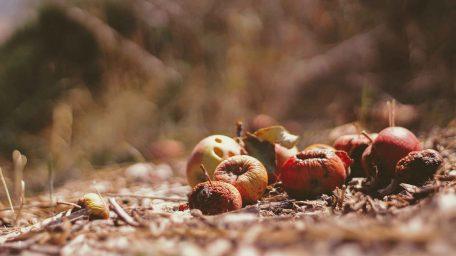 O bioodpadach od A do Z