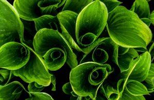 Czy bioodpady są potrzebne?