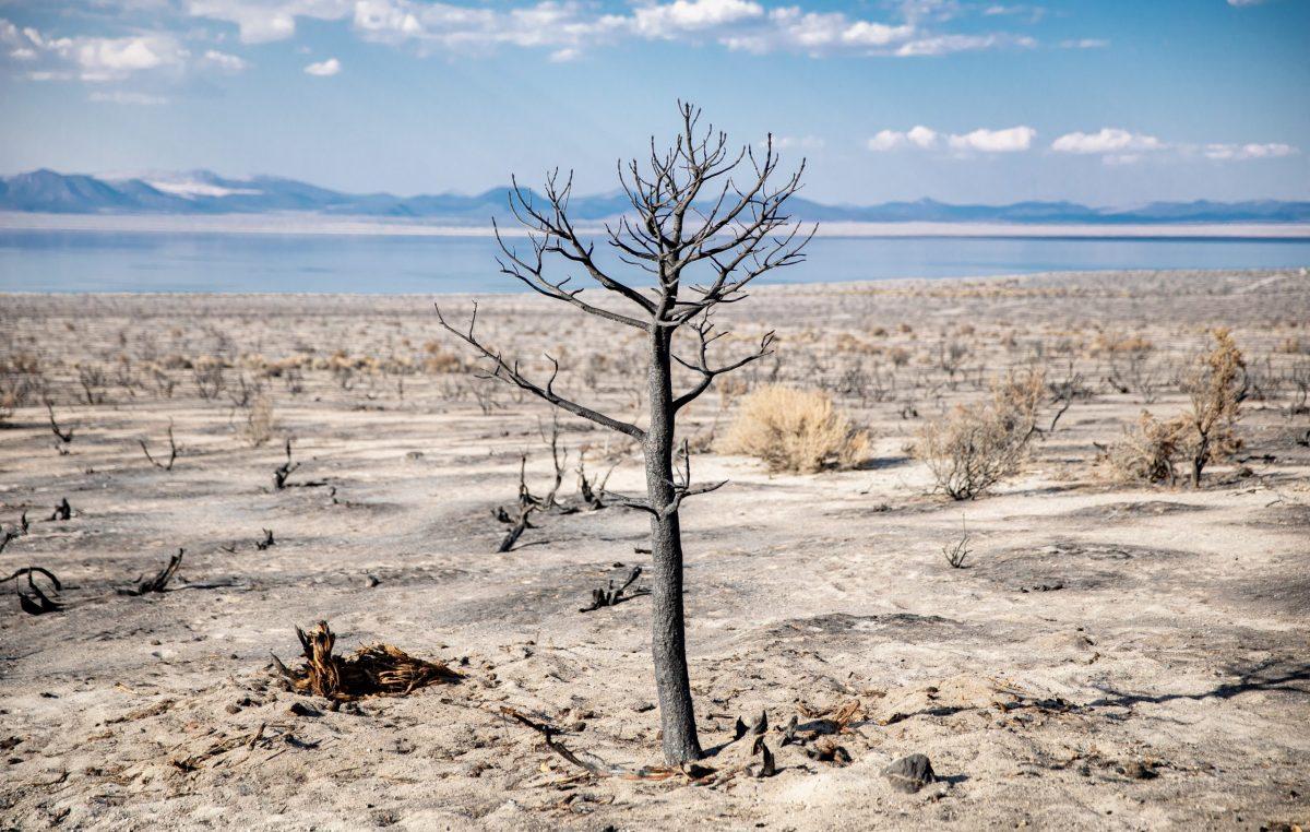Odpady ulegające biodegradacji lekiem na pustynnienie gleb